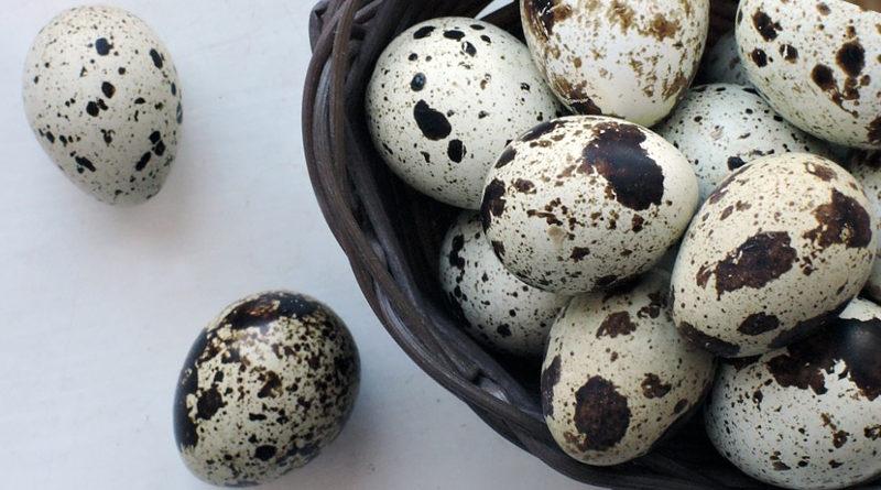 Перепелині яйця - користь для здоров'я людини