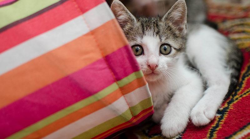 Як назвати кота