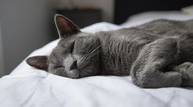Як швидко заснути фото - 1