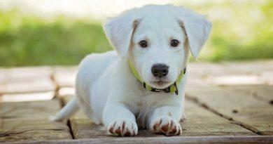 Імена для собак хлопчиків і дівчаток