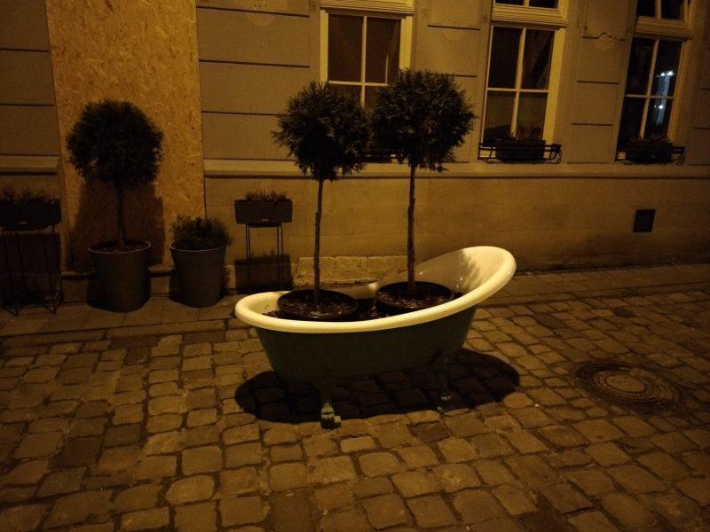 Дерева що ростуть у ванній прямо посеред вулиці