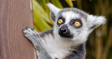 Цікаві факти про тварин